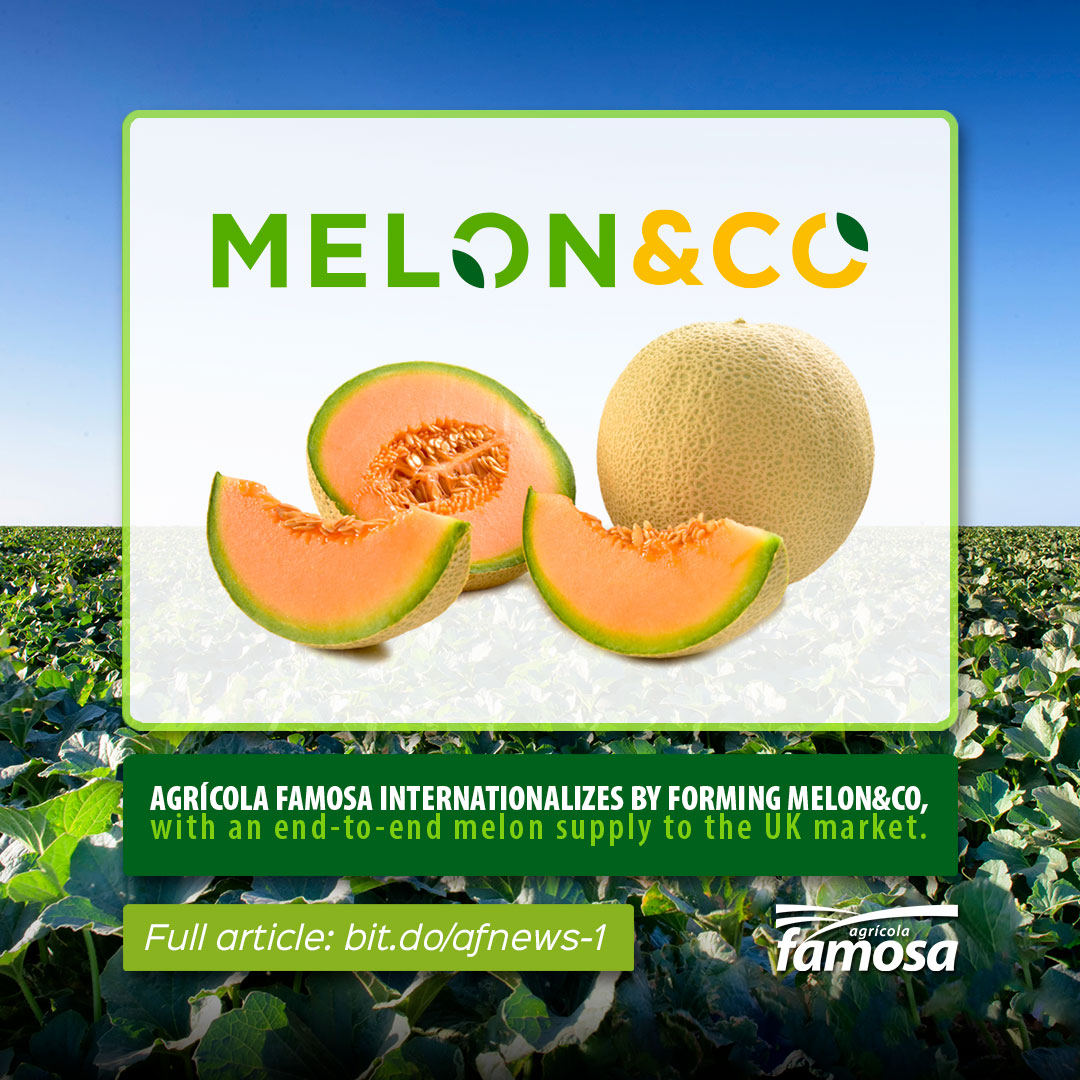 Melon&Co, recently formed by Agrícola Famosa to supply the United Kingdom. 💚🌱🍈🇬🇧